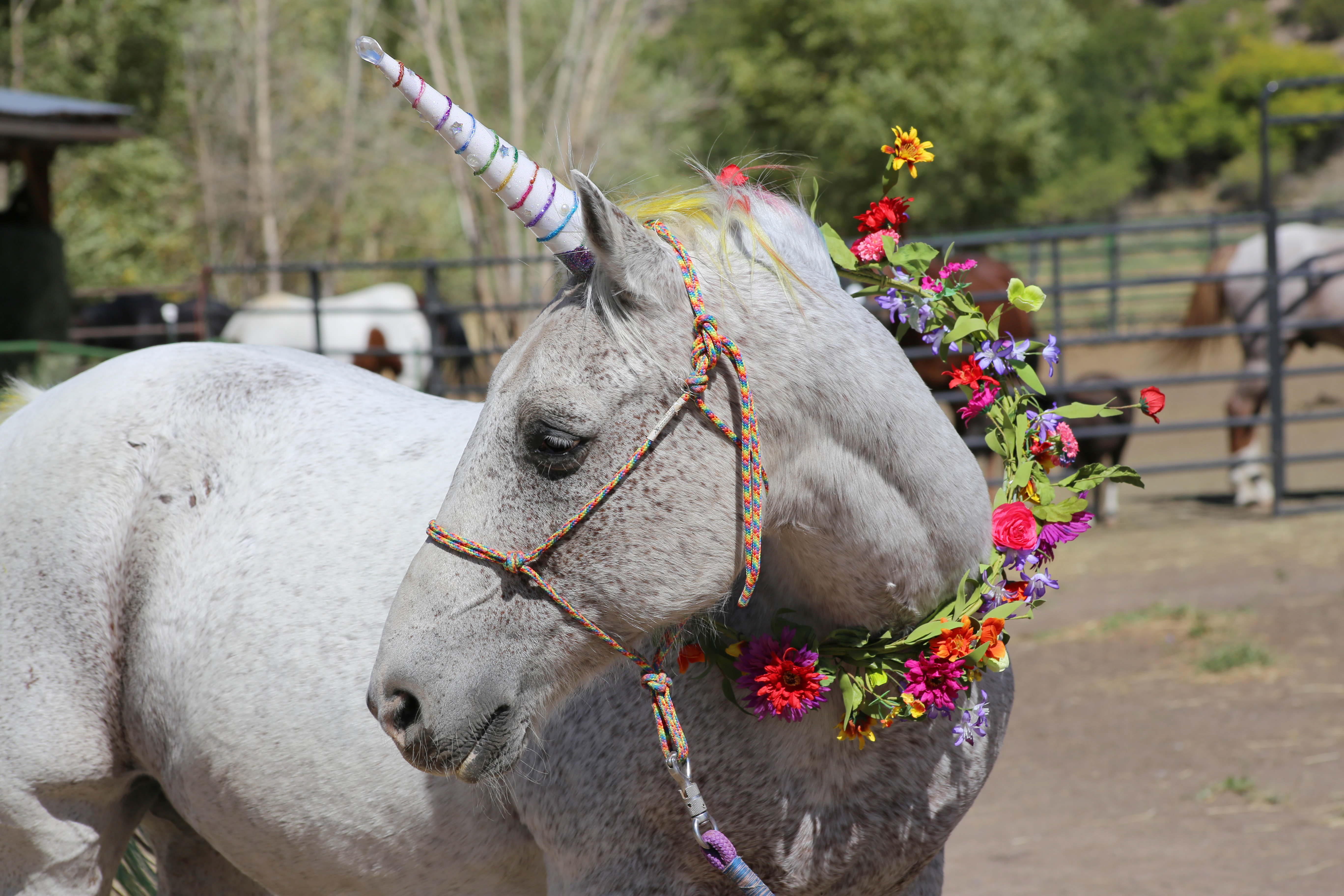 Pony Parties and Unicorns