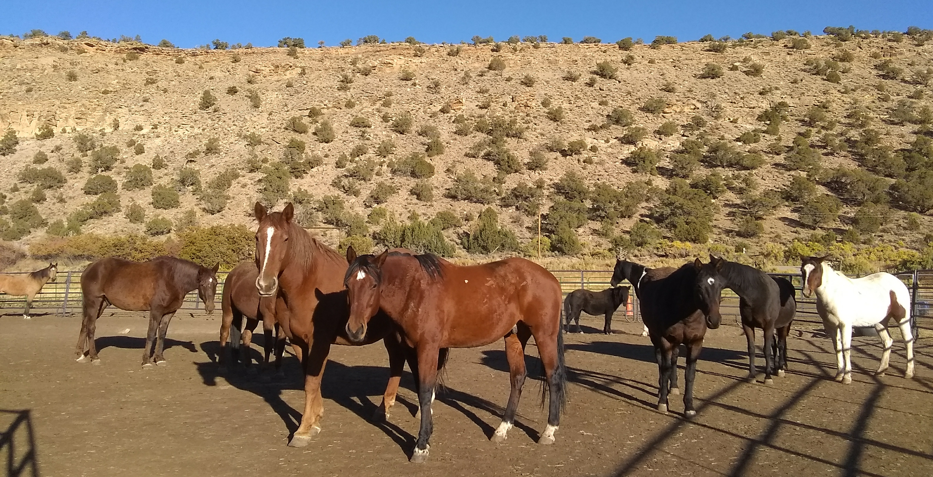 Restoring the Flow of Love with Systemic Constellations and Horses